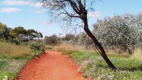 Desert Pack in Alice Springs