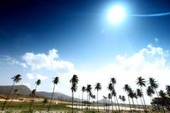 Desert palm Stock Images