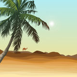 Desert and palm Stock Photos