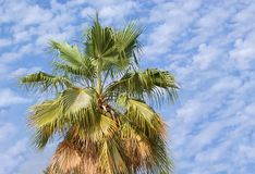 Desert Palm tree Stock Photo