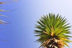 Desert palm yucca plants Stock Image