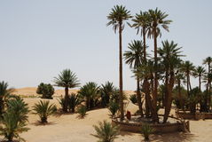 Desert Palms Stock Photography