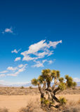 Desert palnt Royalty Free Stock Photo