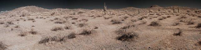 Desert Panorama. Panorama of desert landscape with saguaro cactus royalty free stock photos