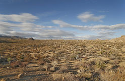 Desert Panorama Stock Photo