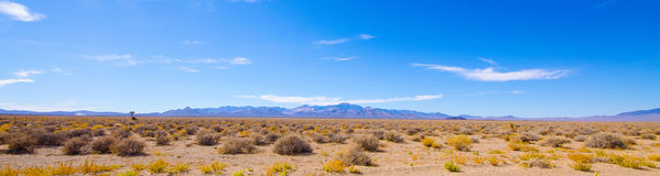 Desert panorama near Area 51. A panorama of the desert area outside Area 51 with desert scrubbery, a distant joshua tree and cow and mountains in the background Stock Photos