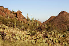 Desert pass with cactus. Mountain pass in the Sonoran desert near Tucson Arizona Royalty Free Stock Image