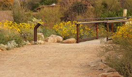 Desert path through the brittlebush Stock Image