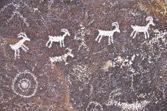 Desert Petroglyph. Ancient Indian petroglyph of desert bighorn sheep in Nevada stock images