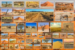 Desert pictures collage Royalty Free Stock Photo