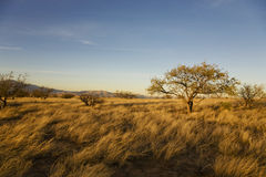 Desert Plain Royalty Free Stock Photo
