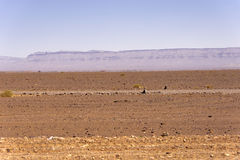 Desert plain near the Sahara. The Sahara ('the Great Desert') is the largest subtropical hot desert and third largest desert after Antarctica and the Arctic. At Stock Images