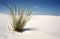 Desert plant. Plant in the desert with endless background stock photos