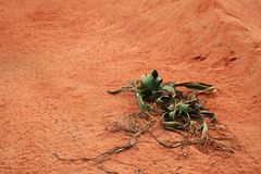 Desert Plant. With nice colored sand and plenty of room for text royalty free stock photos