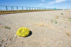 Desert plant Stock Image