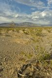Desert plant, blue cloudy sky over Mojave Desert landscape town of Pahrump, Nevada, USA stock photography