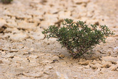 Desert plant close up top Royalty Free Stock Photography