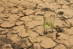 Desert plant drought dry ground. Desert green plant drought dry ground Stock Photography