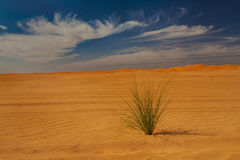 Desert plant Royalty Free Stock Photos
