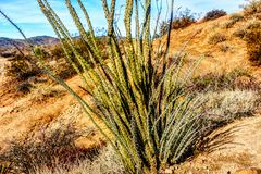 Tall Plant Life in the Desert stock image