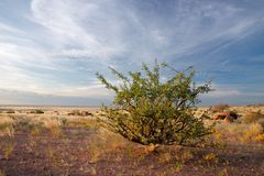 Desert plant and sky, Namibia Stock Photography