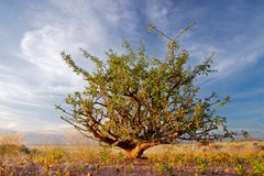 Desert plant and sky, Namibia Royalty Free Stock Photos