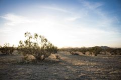 Desert Plant with Sun Rising in the Horizon royalty free stock photography