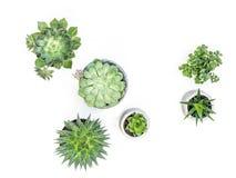 Wonderful desert plant on white background. Desert plant on white background stock images