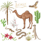 Desert plants and animals set Stock Images