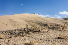 The desert plants at Bruneau dunes. Stock Images