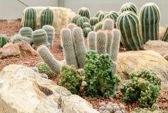 Desert plants (cactus) in garden Stock Image