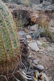 Desert Plants Stock Images