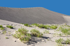 Desert plants cover the sand. Royalty Free Stock Image