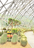 Desert plants greenhouse Stock Photos