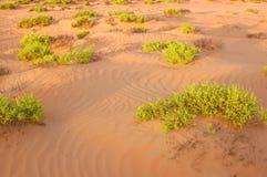 Desert plants Royalty Free Stock Images