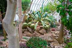 Desert plants at Phipps Conservatory Royalty Free Stock Photo