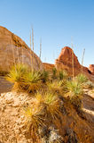 Desert plants and rocks Stock Image