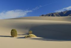 Desert plants on sand dunes Stock Photo