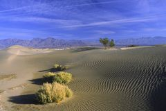 Desert plants on sand dunes Stock Image