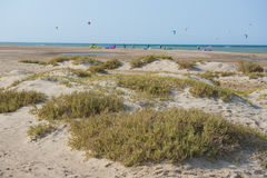 Desert plants on sand dunes with kite surfers at tropical beach Royalty Free Stock Photos