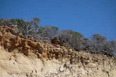 Desert plants and sandstone rock, Torrey Pines State Reserve Stock Photos