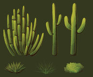 Desert plants. Set of plants growing in the desert of Arizona Royalty Free Stock Photos