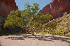 Desert pond Stock Photo