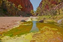 Desert pond Royalty Free Stock Photos