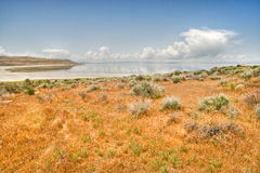 Desert prairie and lake Royalty Free Stock Image