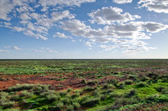Desert after rain Stock Photography
