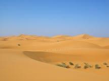 Desert after rain Stock Images