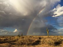 Desert rainbow. A bright rainbow over a tall Saguaro cactus in the Sonoran desert royalty free stock photos