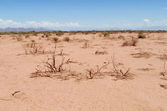 Desert red sandy soil and bushes on it Stock Image