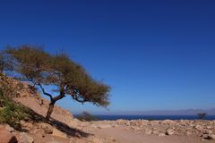 Desert and Red Sea Royalty Free Stock Photography
